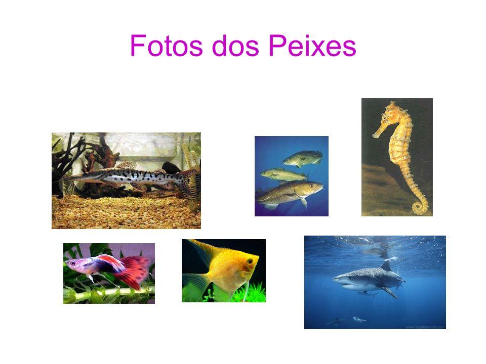 Fotos dos Peixes