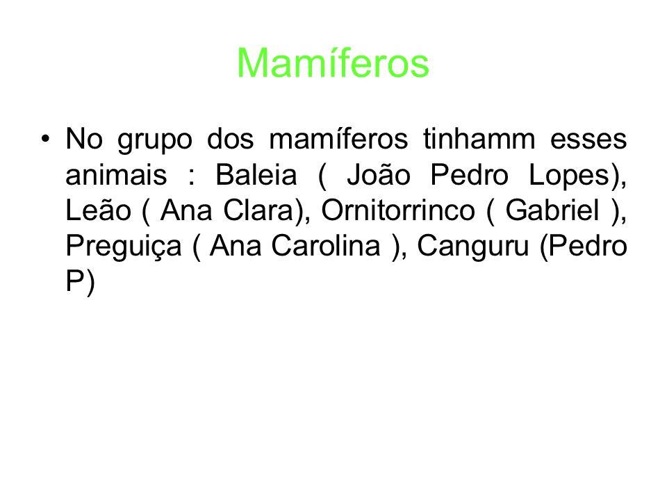 Mamíferos No grupo dos mamíferos tinhamm esses animais : Baleia ( João Pedro Lopes), Leão ( Ana Clara), Ornitorrinco ( Gabriel ), Preguiça ( Ana Carolina ), Canguru (Pedro P)