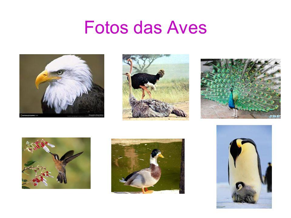 Fotos das Aves