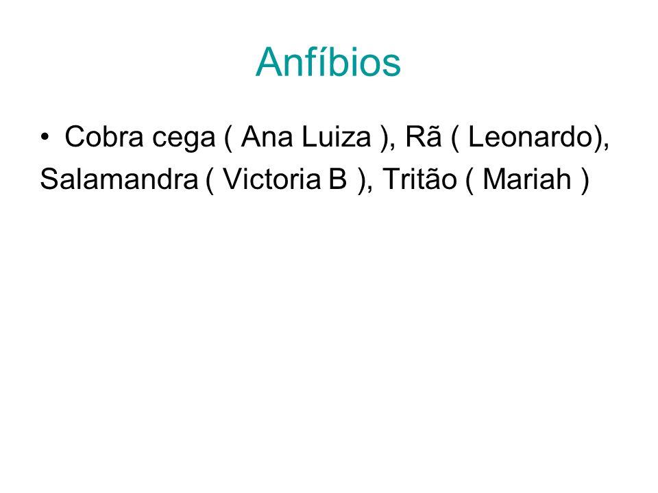 Anfíbios Cobra cega ( Ana Luiza ), Rã ( Leonardo), Salamandra ( Victoria B ), Tritão ( Mariah )