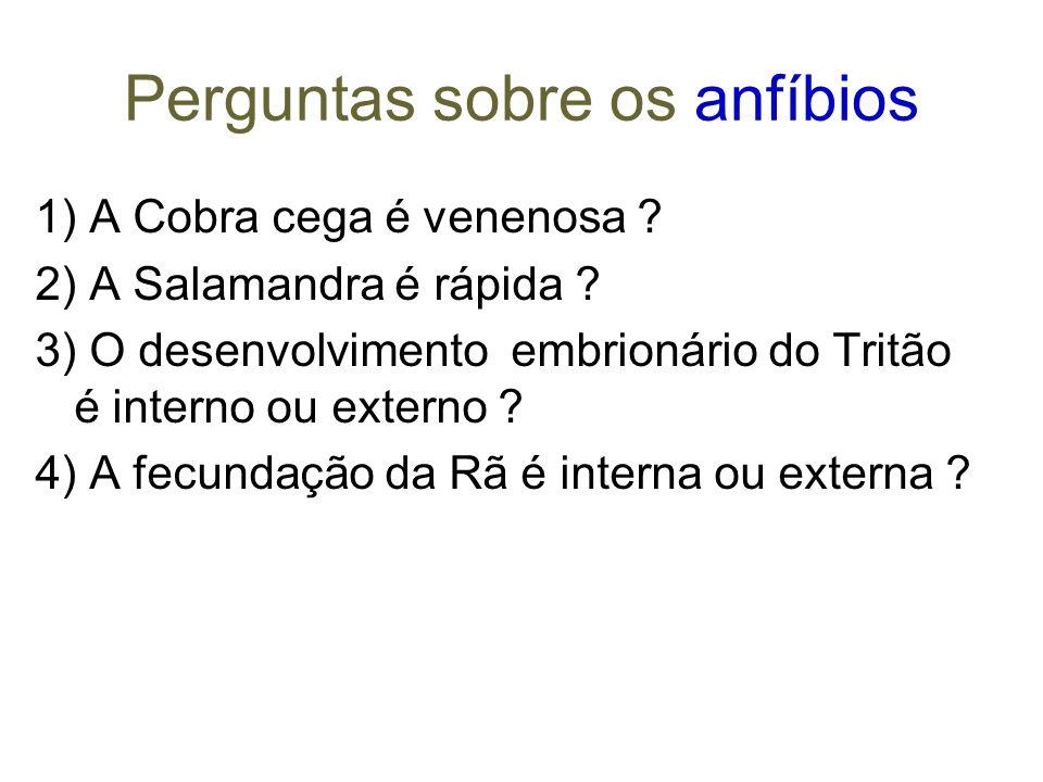 Perguntas sobre os anfíbios 1) A Cobra cega é venenosa .