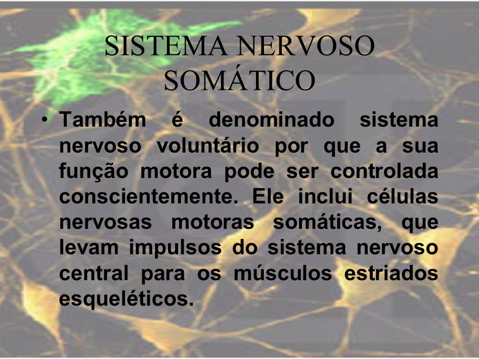 SISTEMA NERVOSO SOMÁTICO Também é denominado sistema nervoso voluntário por que a sua função motora pode ser controlada conscientemente. Ele inclui cé