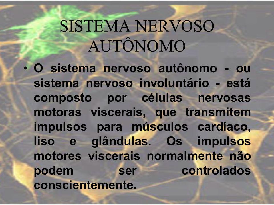 SISTEMA NERVOSO AUTÔNOMO O sistema nervoso autônomo - ou sistema nervoso involuntário - está composto por células nervosas motoras viscerais, que tran