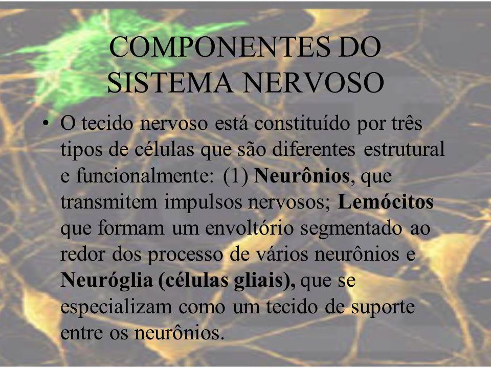 COMPONENTES DO SISTEMA NERVOSO O tecido nervoso está constituído por três tipos de células que são diferentes estrutural e funcionalmente: (1) Neurôni