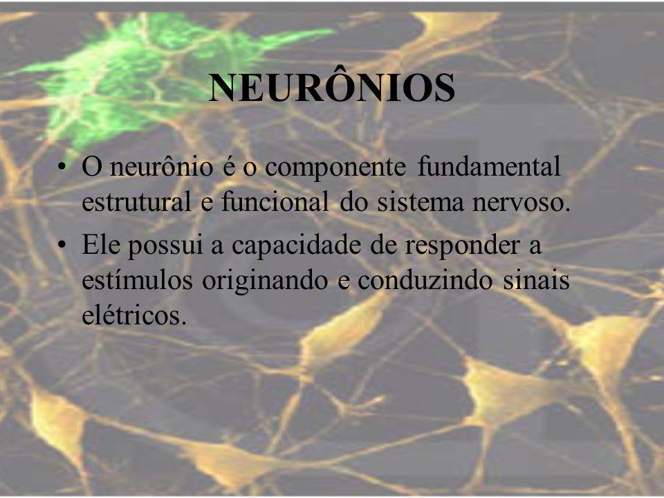 NEURÔNIOS O neurônio é o componente fundamental estrutural e funcional do sistema nervoso. Ele possui a capacidade de responder a estímulos originando