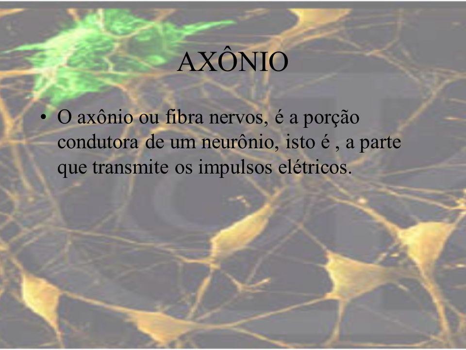 AXÔNIO O axônio ou fibra nervos, é a porção condutora de um neurônio, isto é, a parte que transmite os impulsos elétricos.