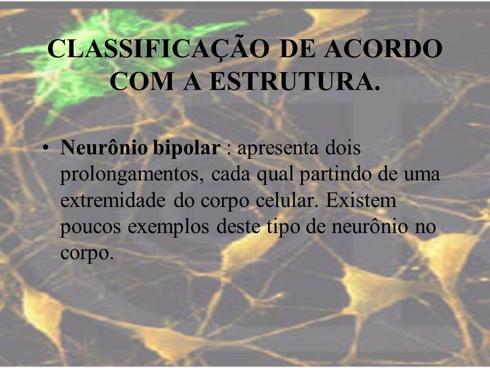 CLASSIFICAÇÃO DE ACORDO COM A ESTRUTURA. Neurônio bipolar : apresenta dois prolongamentos, cada qual partindo de uma extremidade do corpo celular. Exi