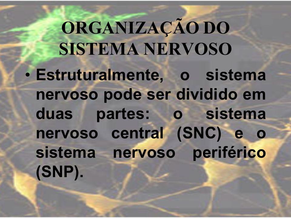 ORGANIZAÇÃO DO SISTEMA NERVOSO Estruturalmente, o sistema nervoso pode ser dividido em duas partes: o sistema nervoso central (SNC) e o sistema nervos