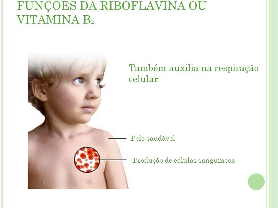FUNÇÕES DA RIBOFLAVINA OU VITAMINA B 2 Pele saudável Produção de células sanguíneas Também auxilia na respiração celular