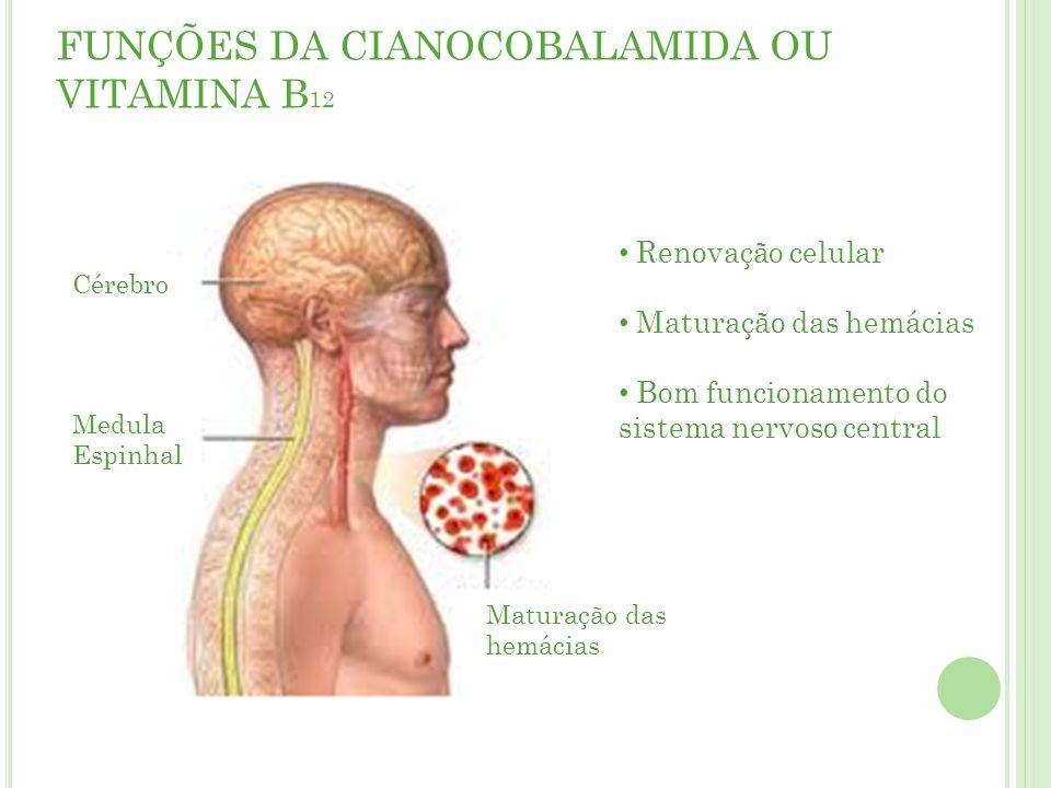 FUNÇÕES DA CIANOCOBALAMIDA OU VITAMINA B 12 Cérebro Medula Espinhal Maturação das hemácias Renovação celular Maturação das hemácias Bom funcionamento do sistema nervoso central