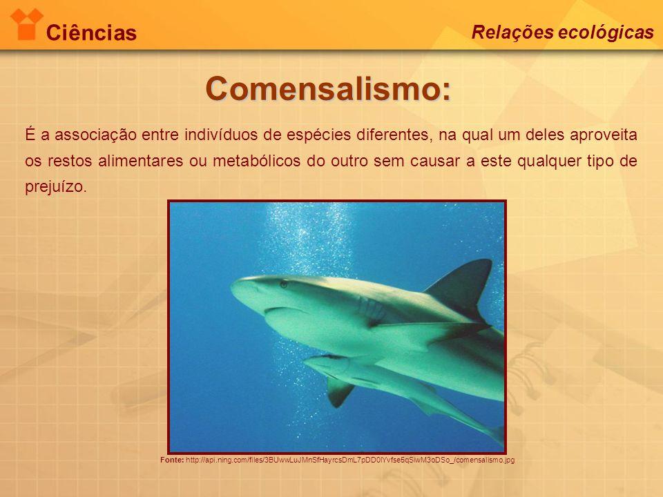 Ciências Relações ecológicas Comensalismo: Fonte: http://api.ning.com/files/3BUwwLuJMnSfHayrcsDmL7pDD0lYvfse5qSiwM3oDSo_/comensalismo.jpg É a associaç