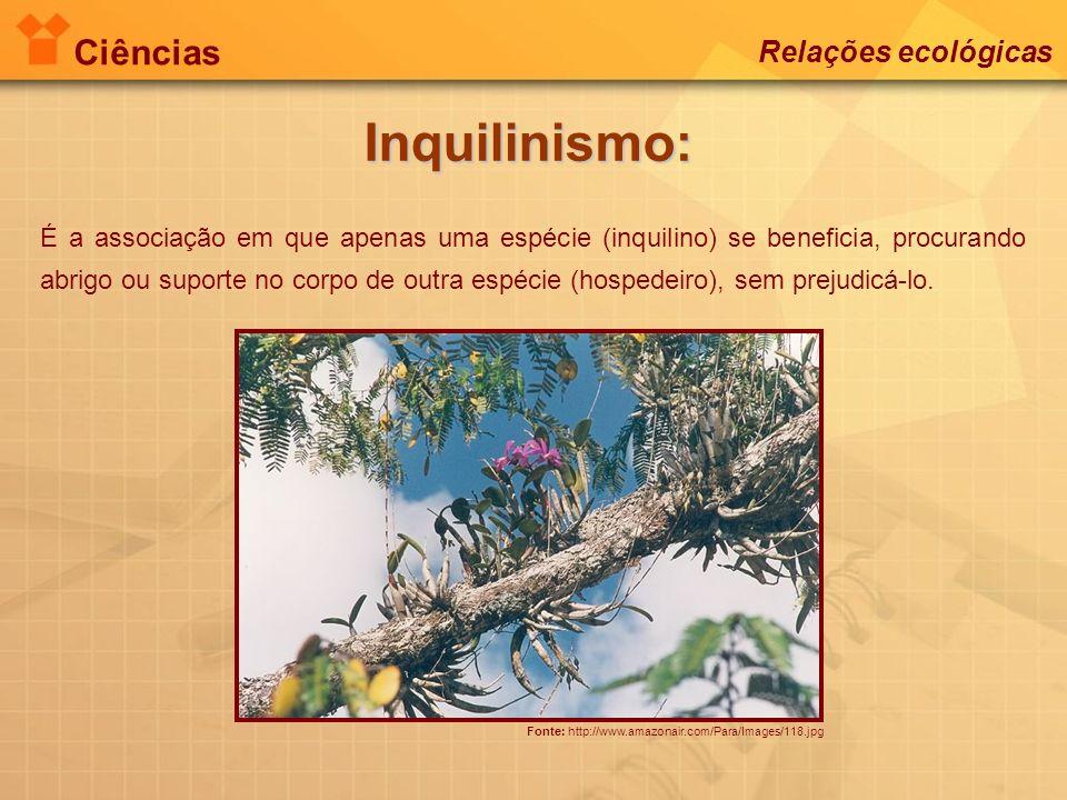Ciências Relações ecológicas Inquilinismo: Fonte: http://www.amazonair.com/Para/Images/118.jpg É a associação em que apenas uma espécie (inquilino) se