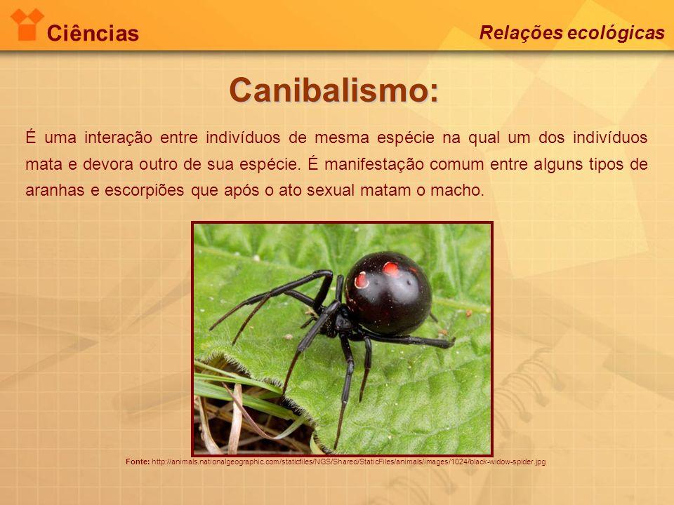 Ciências Relações ecológicas Canibalismo: Fonte: http://animals.nationalgeographic.com/staticfiles/NGS/Shared/StaticFiles/animals/images/1024/black-wi