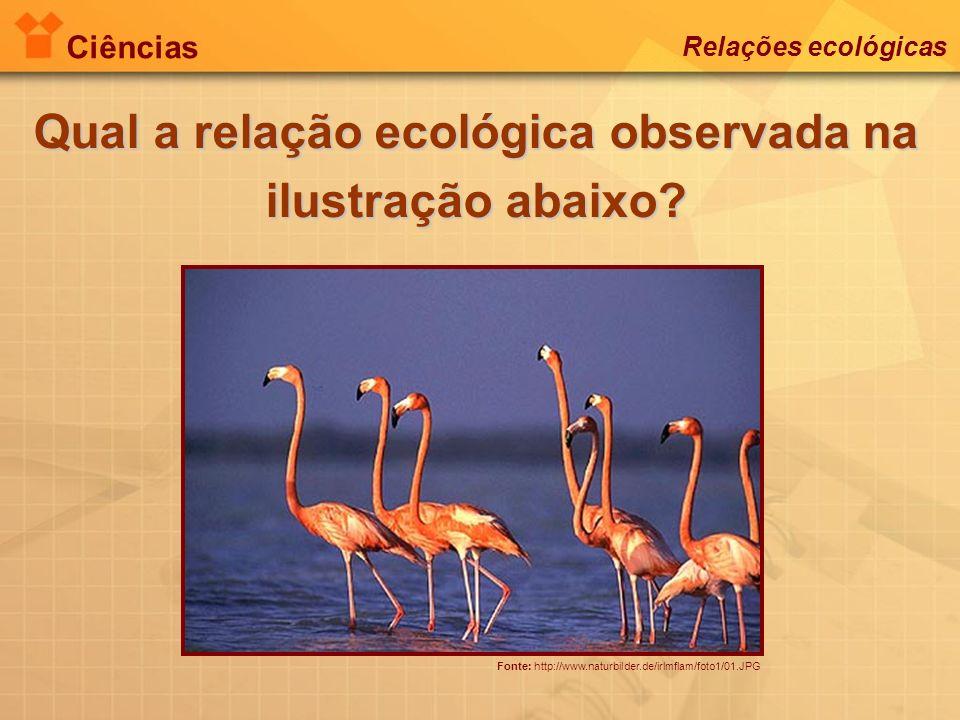 Ciências Relações ecológicas Fonte: http://www.naturbilder.de/irlmflam/foto1/01.JPG Qual a relação ecológica observada na ilustração abaixo?
