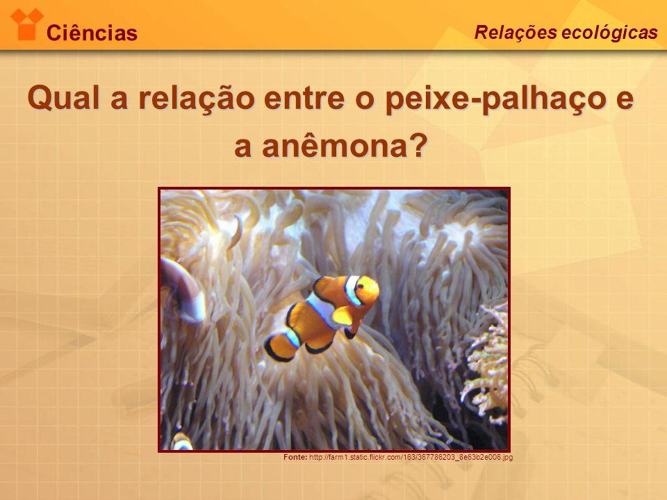 Ciências Relações ecológicas Qual a relação entre o peixe-palhaço e a anêmona? Fonte: http://farm1.static.flickr.com/163/367786203_8e63b2e006.jpg