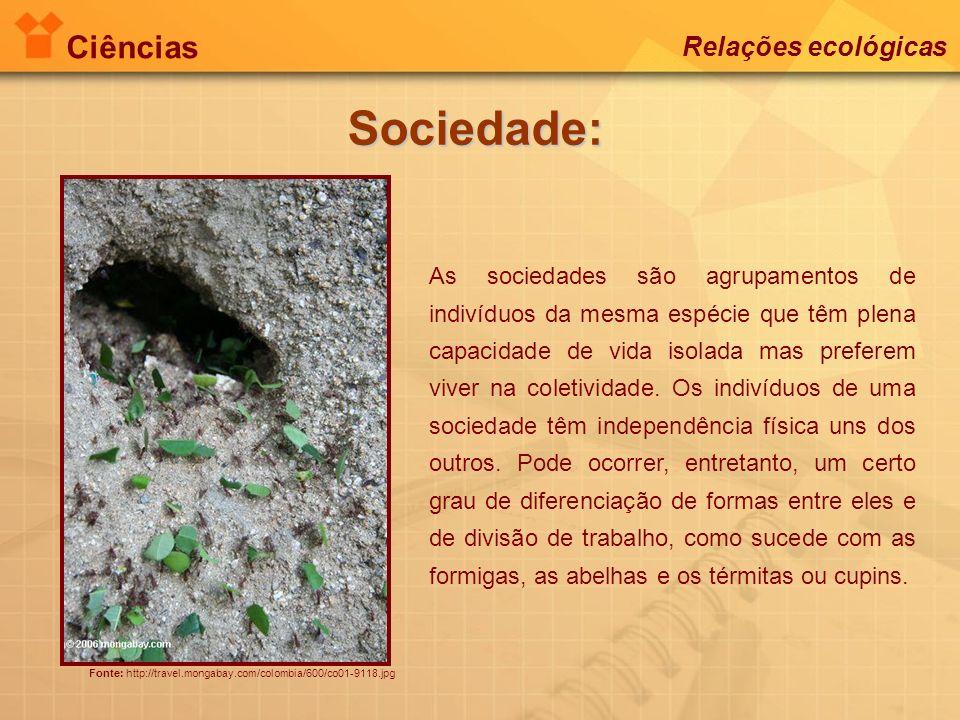 Ciências Relações ecológicas Sociedade: Fonte: http://travel.mongabay.com/colombia/600/co01-9118.jpg As sociedades são agrupamentos de indivíduos da m