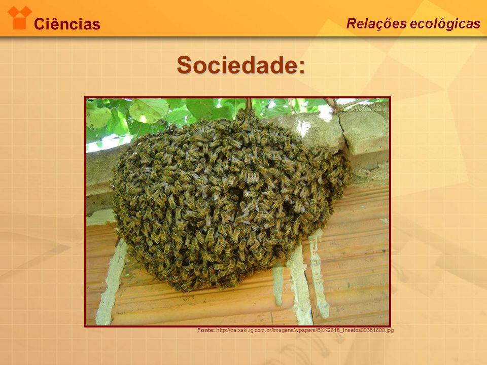 Ciências Relações ecológicas Sociedade: Fonte: http://baixaki.ig.com.br/imagens/wpapers/BXK2615_Insetos00351800.jpg