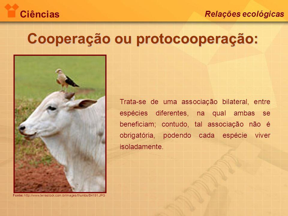 Ciências Relações ecológicas Cooperação ou protocooperação: Fonte: http://www.terrastock.com.br/images/thumbs/B4191.JPG Trata-se de uma associação bil
