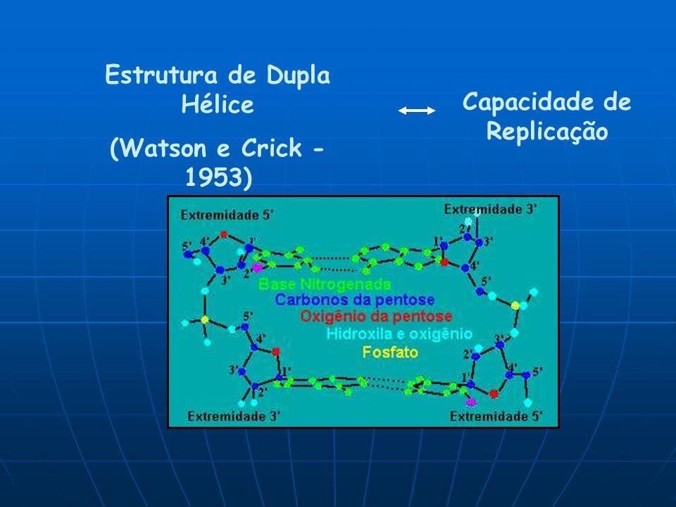 Estrutura de Dupla Hélice (Watson e Crick - 1953) Capacidade de Replicação