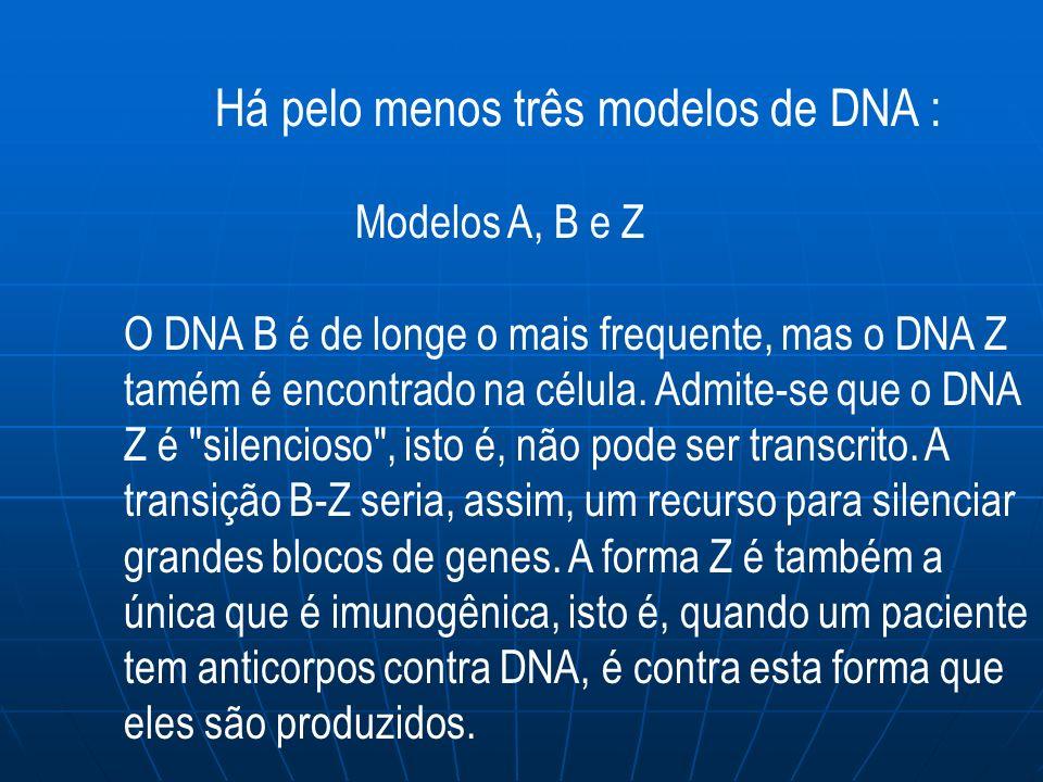 Há pelo menos três modelos de DNA : Modelos A, B e Z O DNA B é de longe o mais frequente, mas o DNA Z tamém é encontrado na célula.