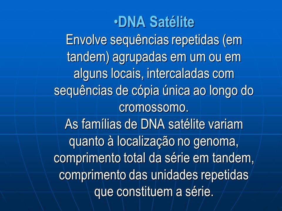 DNA Satélite Envolve sequências repetidas (em tandem) agrupadas em um ou em alguns locais, intercaladas com sequências de cópia única ao longo do cromossomo.