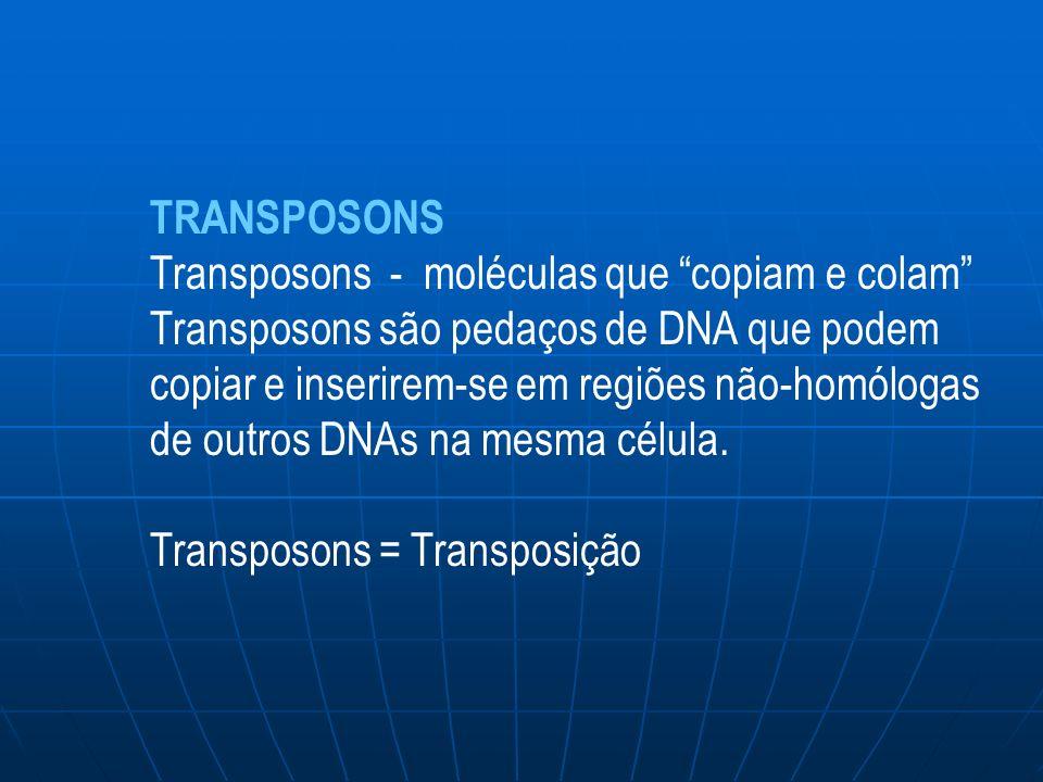 TRANSPOSONS Transposons - moléculas que copiam e colam Transposons são pedaços de DNA que podem copiar e inserirem-se em regiões não-homólogas de outros DNAs na mesma célula.