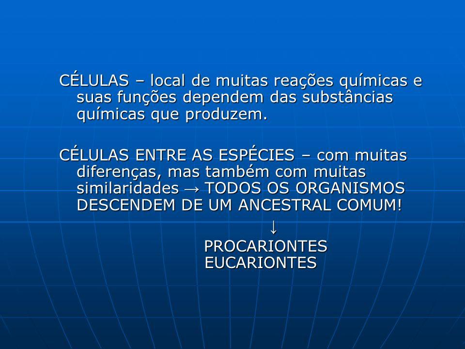 CÉLULAS – local de muitas reações químicas e suas funções dependem das substâncias químicas que produzem.