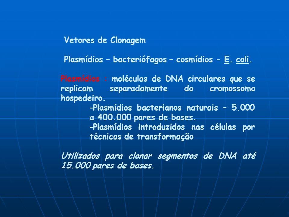 Vetores de Clonagem Plasmídios – bacteriófagos – cosmídios - E.