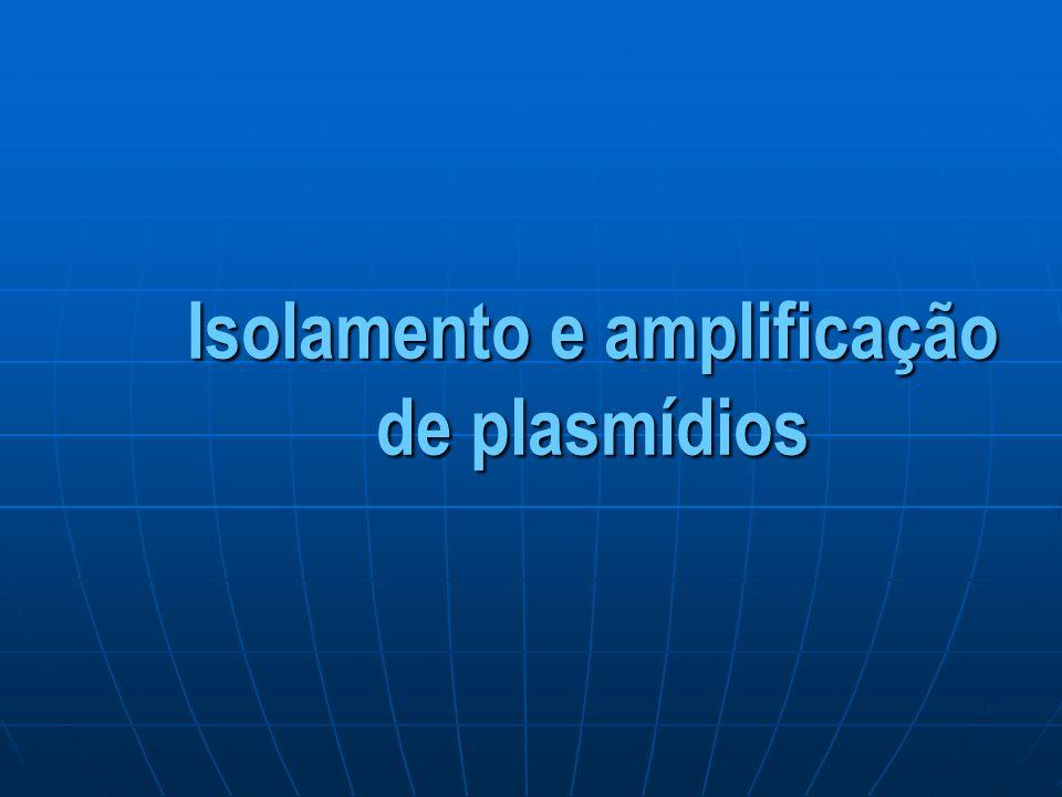 Isolamento e amplificação de plasmídios
