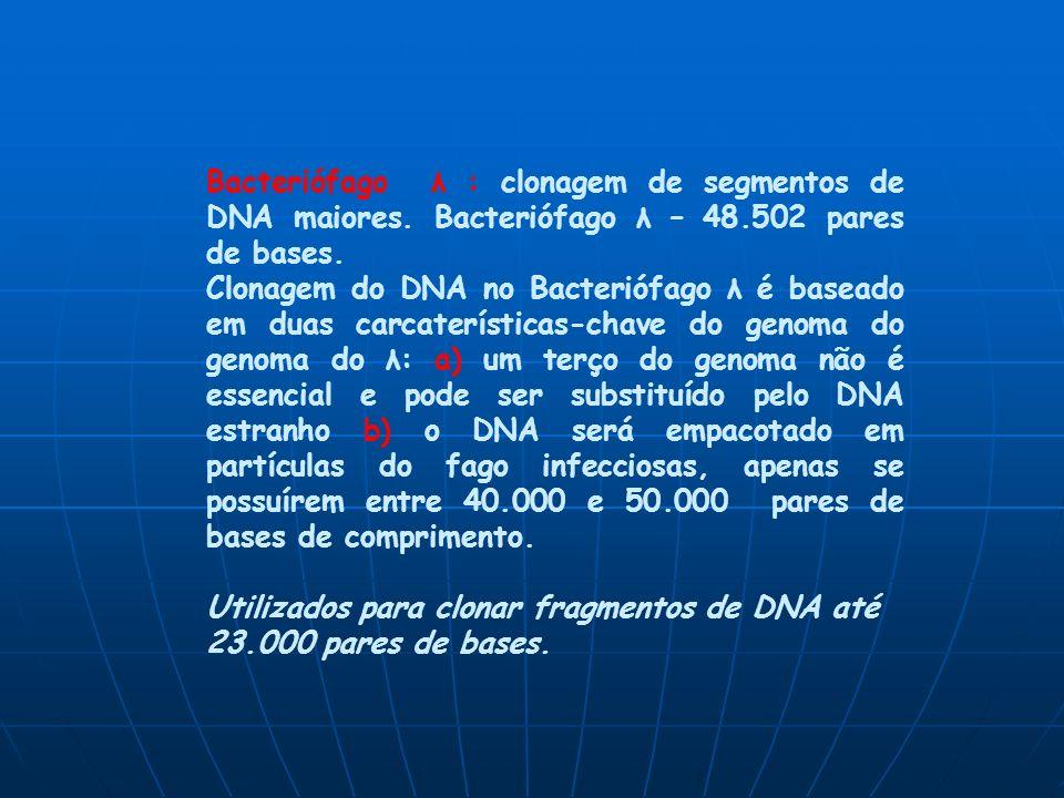 Bacteriófago λ : clonagem de segmentos de DNA maiores.