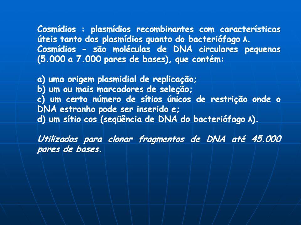 Cosmídios : plasmídios recombinantes com características úteis tanto dos plasmídios quanto do bacteriófago λ.