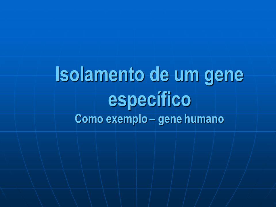 Isolamento de um gene específico Como exemplo – gene humano