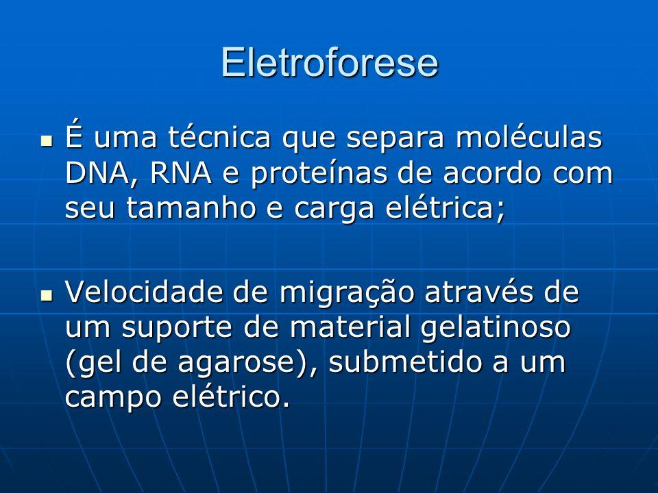Eletroforese É uma técnica que separa moléculas DNA, RNA e proteínas de acordo com seu tamanho e carga elétrica; É uma técnica que separa moléculas DNA, RNA e proteínas de acordo com seu tamanho e carga elétrica; Velocidade de migração através de um suporte de material gelatinoso (gel de agarose), submetido a um campo elétrico.