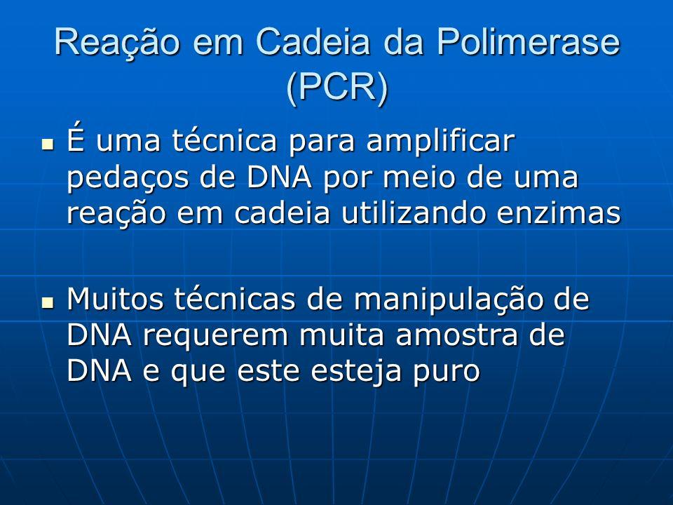 Reação em Cadeia da Polimerase (PCR) É uma técnica para amplificar pedaços de DNA por meio de uma reação em cadeia utilizando enzimas É uma técnica para amplificar pedaços de DNA por meio de uma reação em cadeia utilizando enzimas Muitos técnicas de manipulação de DNA requerem muita amostra de DNA e que este esteja puro Muitos técnicas de manipulação de DNA requerem muita amostra de DNA e que este esteja puro