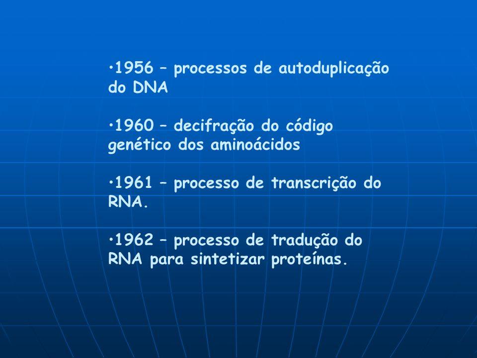 1956 – processos de autoduplicação do DNA 1960 – decifração do código genético dos aminoácidos 1961 – processo de transcrição do RNA.