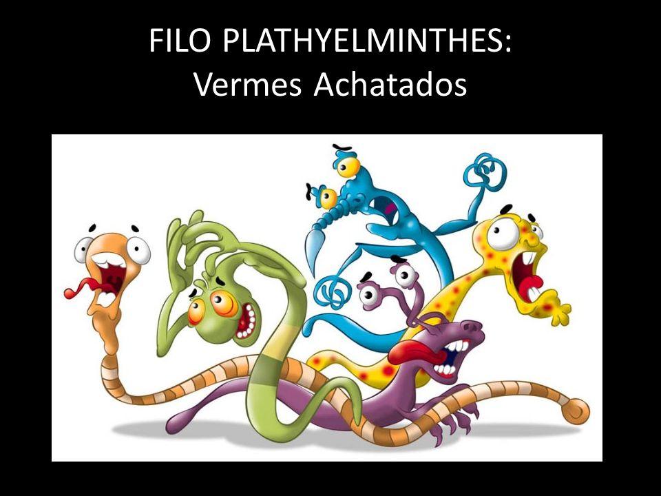 FILO PLATHYELMINTHES: Vermes Achatados
