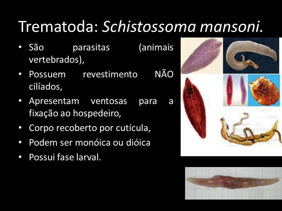 Trematoda: Schistossoma mansoni. São parasitas (animais vertebrados), Possuem revestimento NÃO cilíados, Apresentam ventosas para a fixação ao hospede