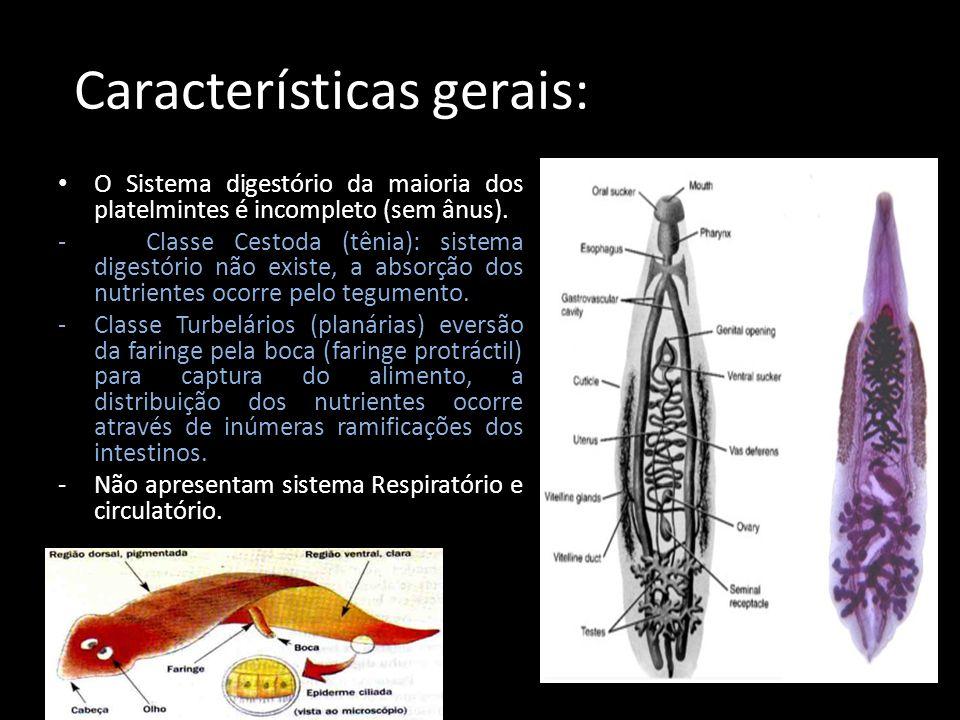 Características gerais: O Sistema digestório da maioria dos platelmintes é incompleto (sem ânus). - Classe Cestoda (tênia): sistema digestório não exi