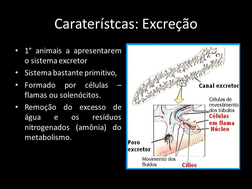 Caraterístcas: Excreção 1° animais a apresentarem o sistema excretor Sistema bastante primitivo, Formado por células – flamas ou solenócitos. Remoção