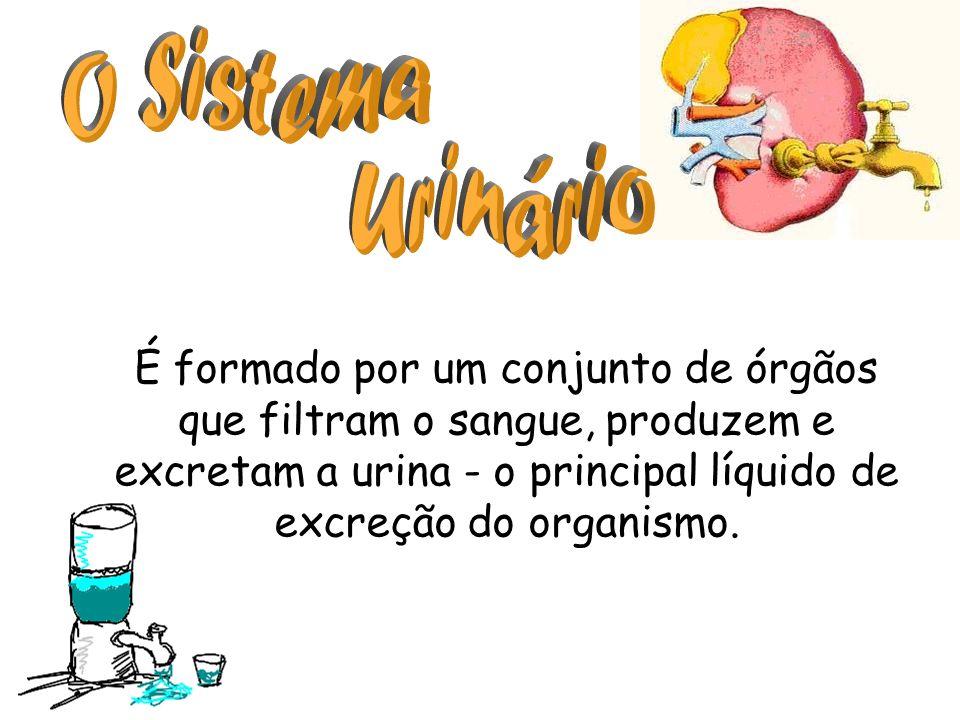 É formado por um conjunto de órgãos que filtram o sangue, produzem e excretam a urina - o principal líquido de excreção do organismo.