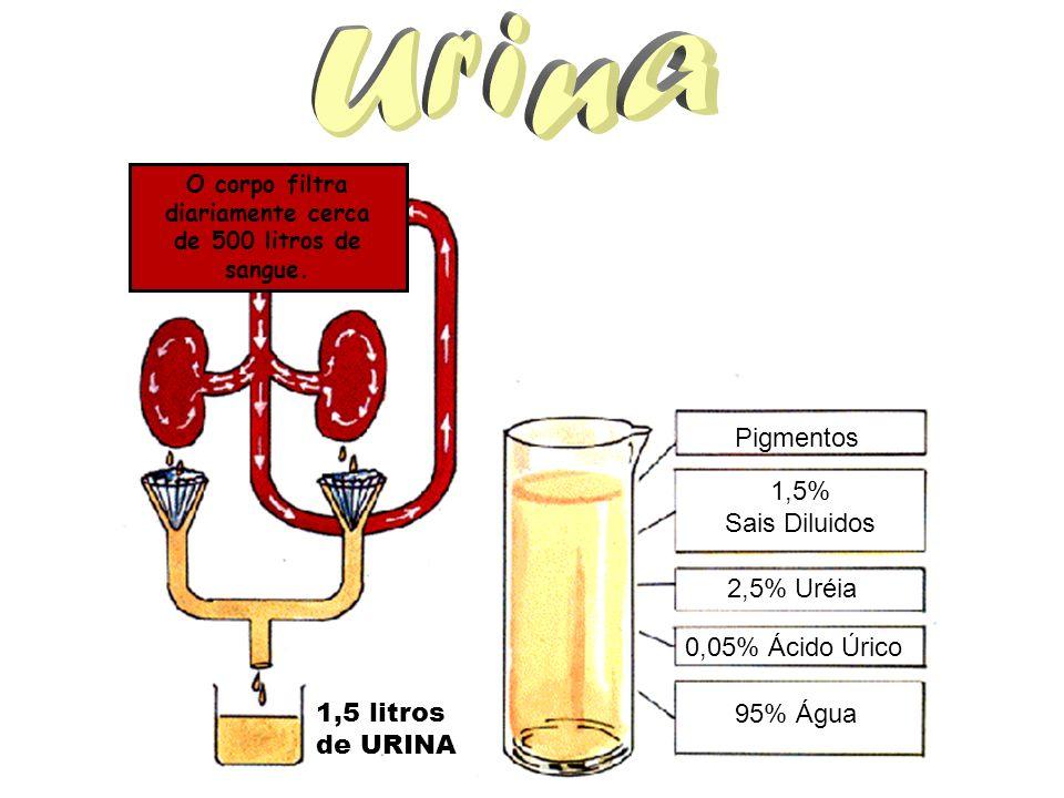 O corpo filtra diariamente cerca de 500 litros de sangue. 1,5 litros de URINA 95% Água 1,5% Sais Diluidos 2,5% Uréia 0,05% Ácido Úrico Pigmentos