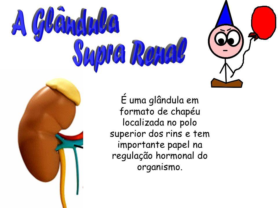 É uma glândula em formato de chapéu localizada no polo superior dos rins e tem importante papel na regulação hormonal do organismo.