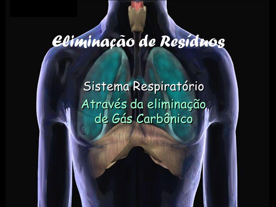 Sistema Respiratório Através da eliminação de Gás Carbônico Sistema Respiratório Através da eliminação de Gás Carbônico Eliminação de Resíduos