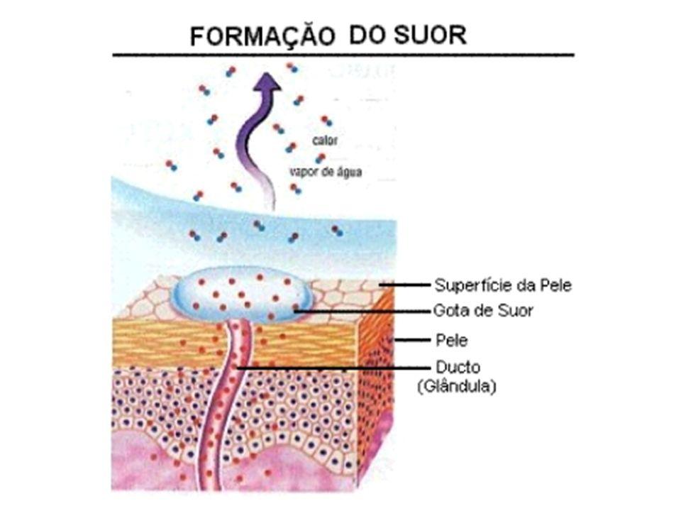 RIM Ureteres Bexiga Trompa Ovário Uretra Vulva Vagina Epidídimo Próstata Vesícula Seminal Pênis Glande Testículo