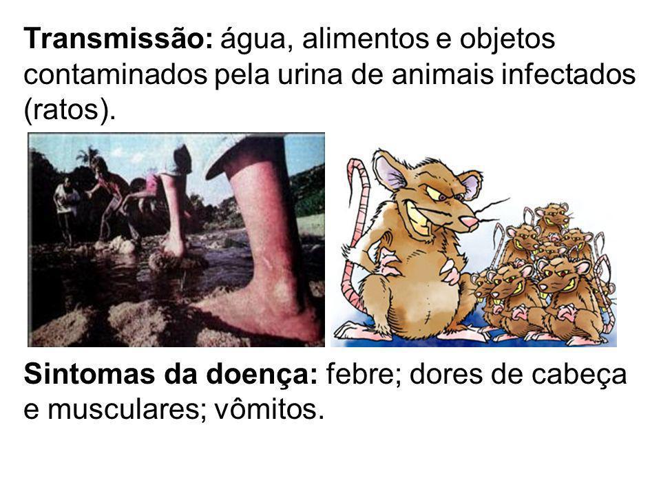 Transmissão: água, alimentos e objetos contaminados pela urina de animais infectados (ratos). Sintomas da doença: febre; dores de cabeça e musculares;