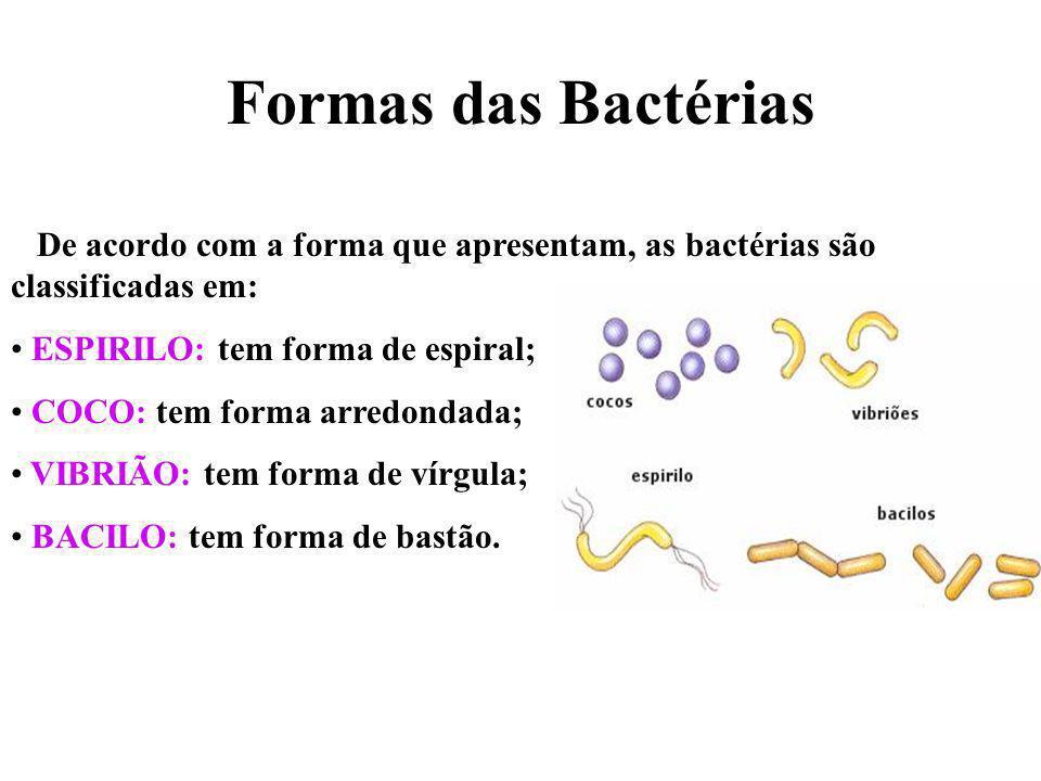 LEPTOSPIROSE Bactéria: Leptospira interrogans. Vibrião – bactéria em forma de vírgula