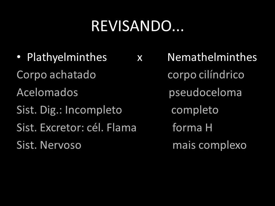 REVISANDO... Plathyelminthes x Nemathelminthes Corpo achatado corpo cilíndrico Acelomados pseudoceloma Sist. Dig.: Incompleto completo Sist. Excretor: