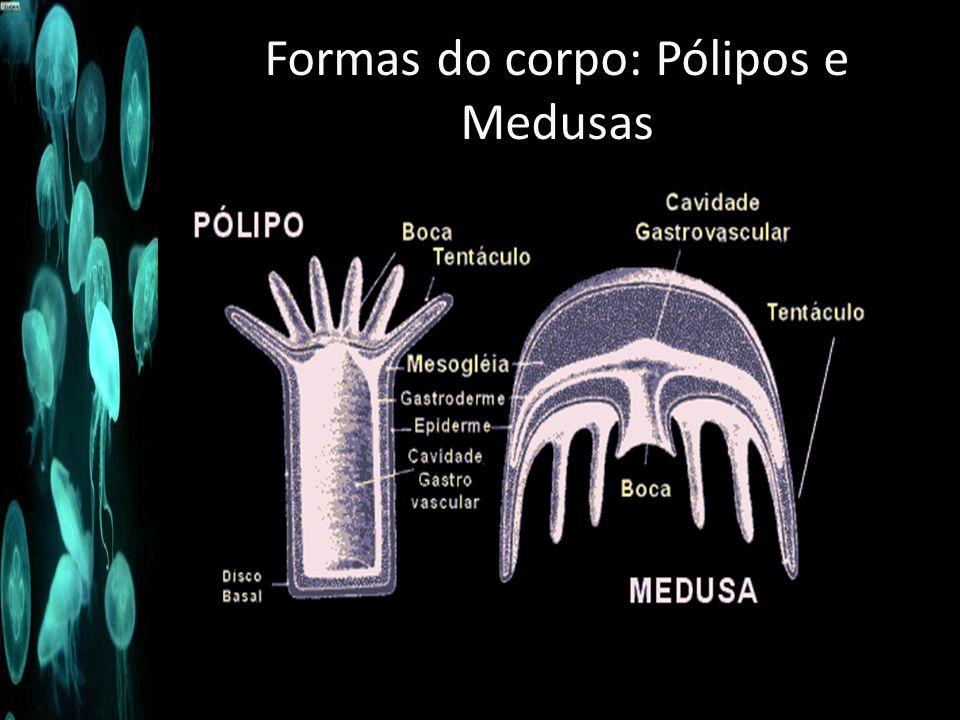Formas do corpo: Pólipos e Medusas