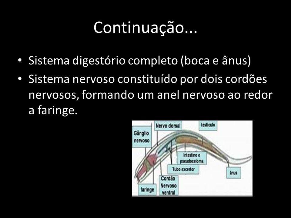 Continuação... Sistema digestório completo (boca e ânus) Sistema nervoso constituído por dois cordões nervosos, formando um anel nervoso ao redor a fa