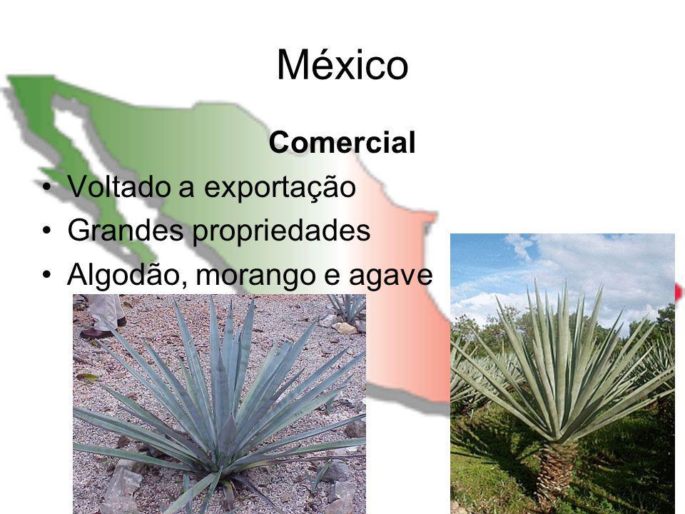 México Comercial Voltado a exportação Grandes propriedades Algodão, morango e agave